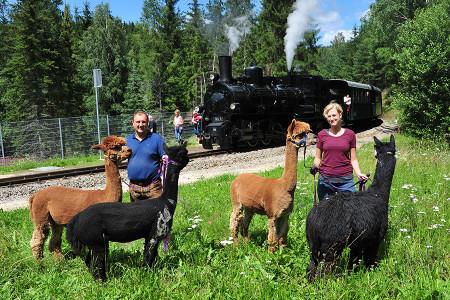 """Erlebniswanderung """"Sonnseitn Alpakahof"""" am 6. Juli 2019"""